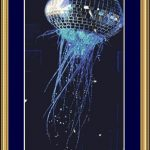 Disco Jellyfish